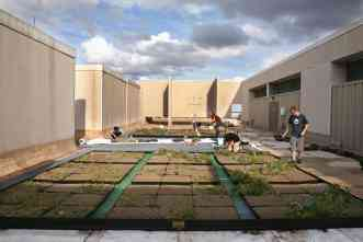 Greening of Langford's rooftop is part of three-year research project