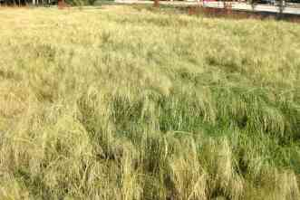 New books will increase knowledge about grasses across the state
