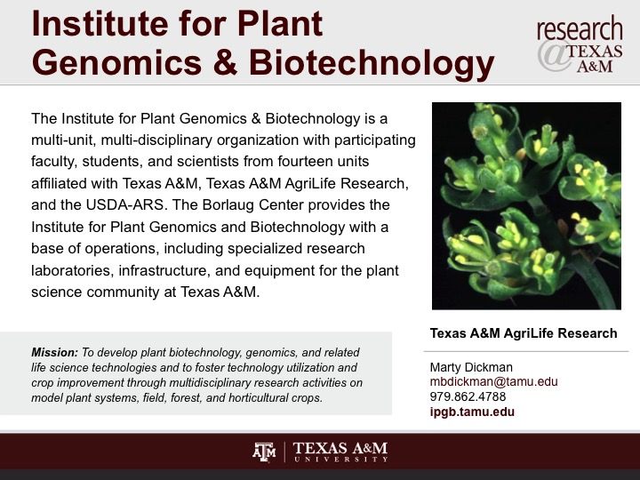 institute_for_plant_genomics_and_biotechnology