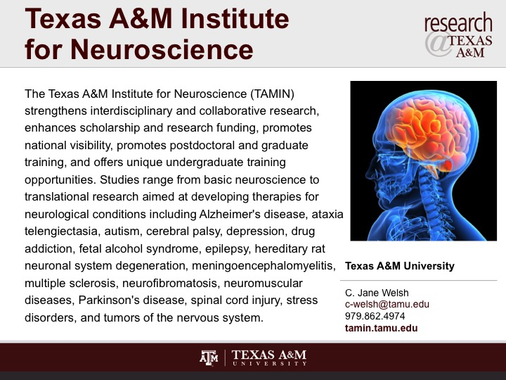 texas_a_and_m_institute_for_neuroscience