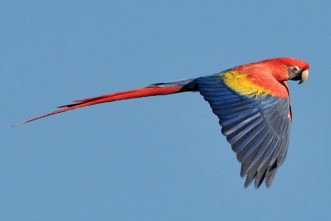 Team sequences complete genome of Scarlet macaw