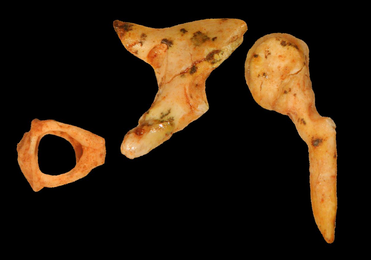 Tiny Ear Bones Could Provide Major Clues About Early Humans