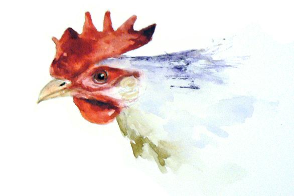 whitechicken