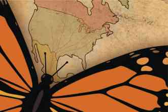 Follow your antennae! Researchers discover how Monarch butterflies navigate across North America