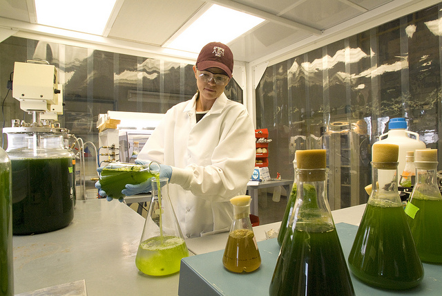 From feed to fuel, algae research is a fountainhead for useful products