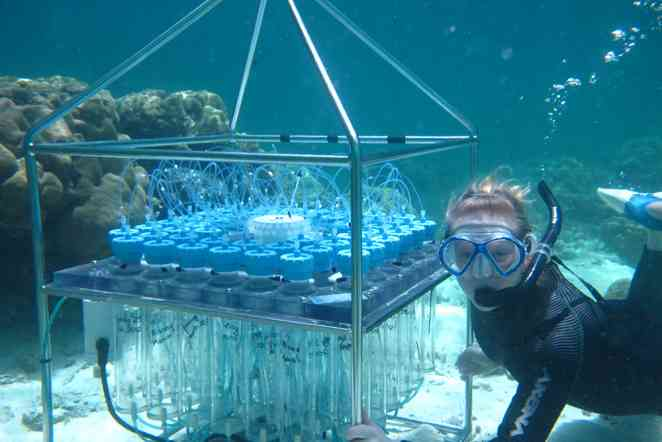 Unexpected: Some Pacific coral reefs are thriving in highly acidic waters