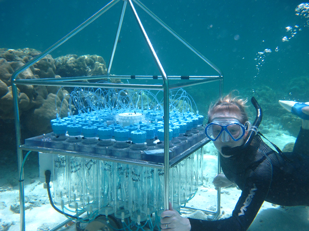 A scuba diver takes water samples by coral bed