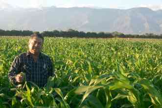 Central American farmers welcome sorghum designed to thrive in tropics