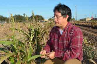 Mysterious pest threatens Texas' billion-dollar grain sorghum crop