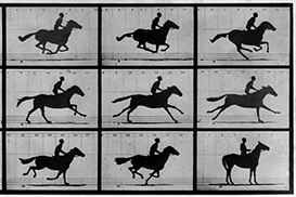 Why do horses move like they do? Research says it's a genetic 'mistake'