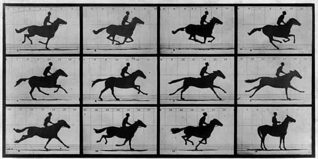 Series of photos of a horse in motion