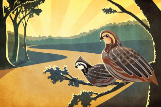 Where have all the bobwhites gone? Genome project looks for answers