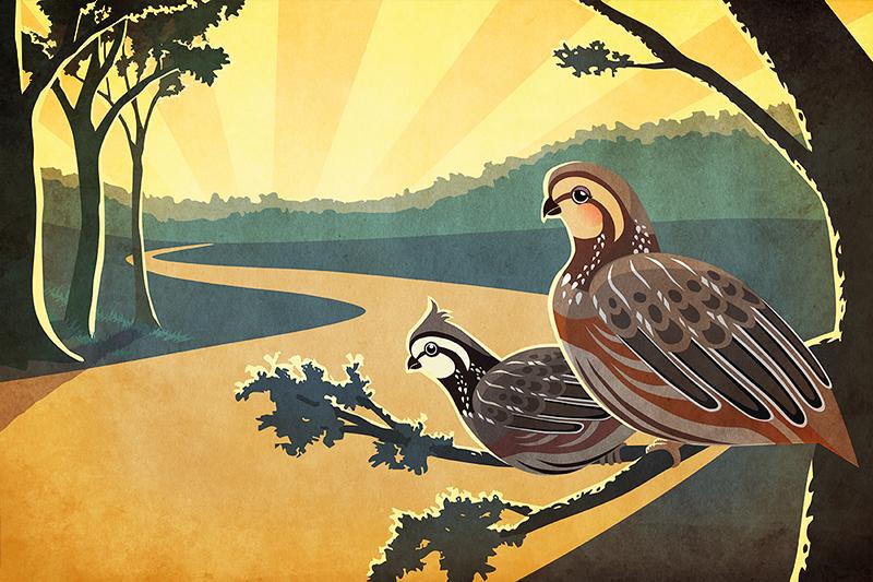 quail_final1