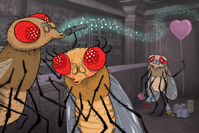 The fruit fly's guide to courtship: How the 'bad boys' beat the competition