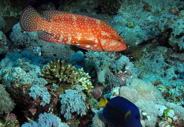 Saving coral reefs in Red Sea: Team studies effects of population growth