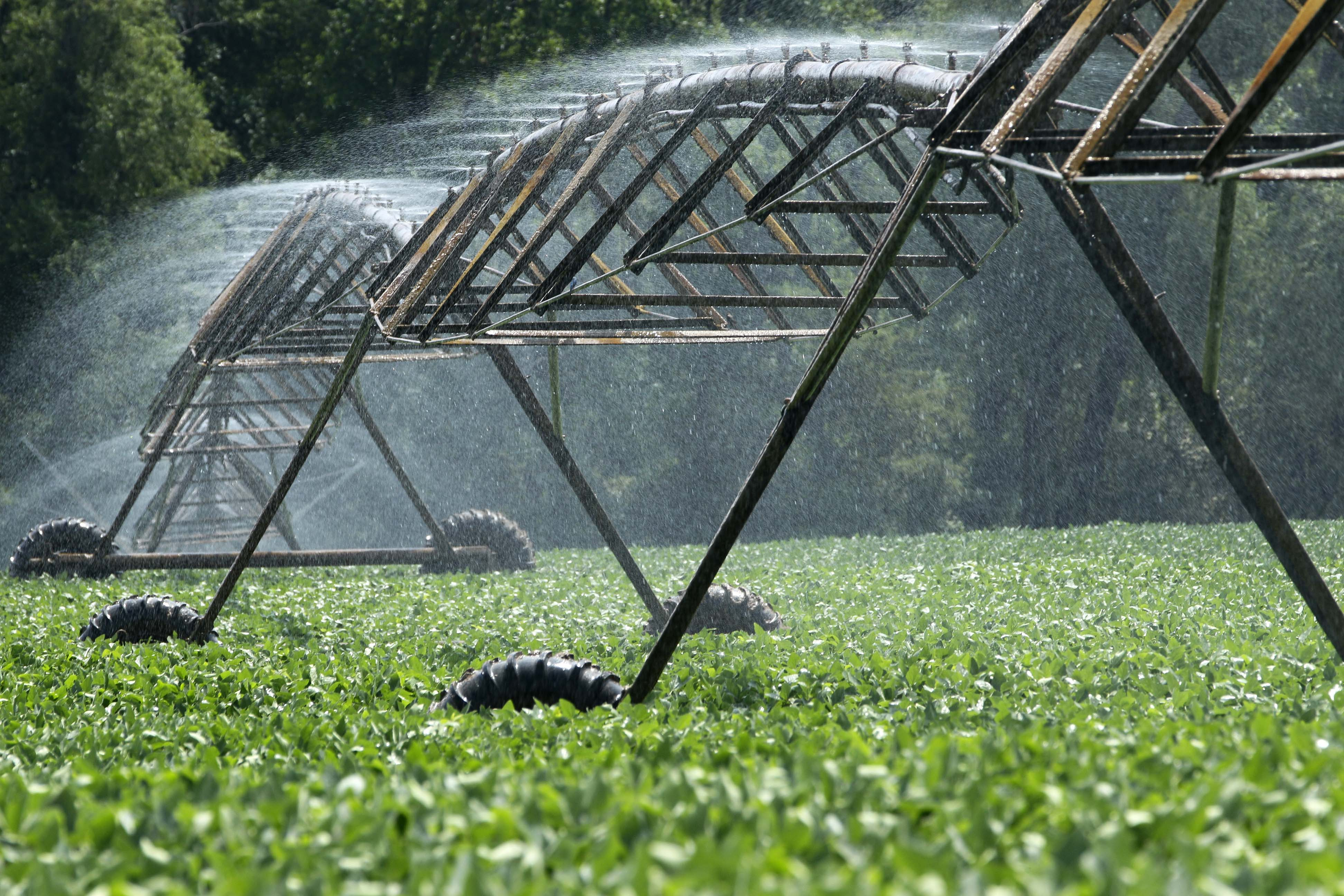 irrigation system sprays water on field of crops