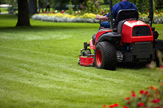 That 'fresh-mown lawn smell' is actually a distress call to insects