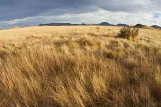 Vanishing grasslands: NSF-funded study will examine role of humans