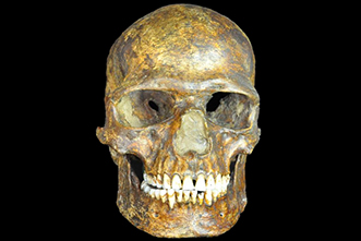 Ancient DNA: Humans settled in Europe, East Asia 36,000 years ago