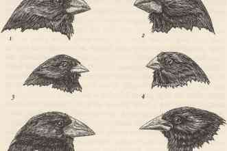TIAS Fellow leads effort to ID gene that explains variations in beaks