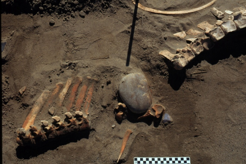 Bones of a prehistoric horse found near a Canadian reservoir