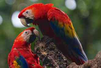 New vaccine would combat lethal disease affecting captive parrots