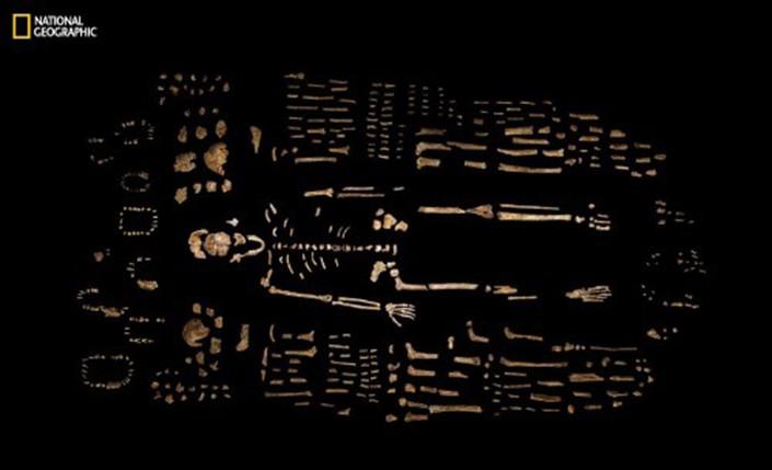 skeleton of prehistoric ancestor of humans