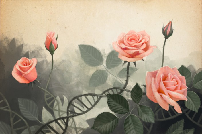 an illustration of roses
