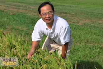 Research aims to help growers of organic rice keep pace with demand