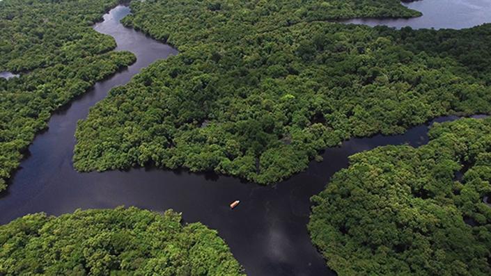 a large river cuts through a jungle
