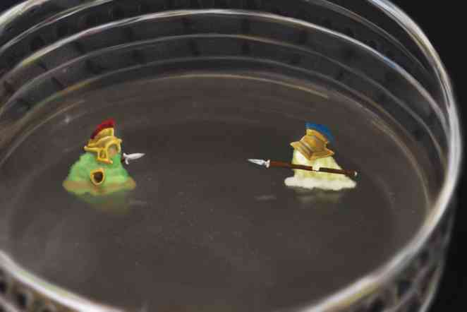 Of micro combat: Study looks at how bacteria wage war, resist occupation