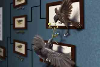 Darwin's finches: Team finds gene that affects variations in beak sizes