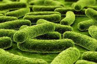 Tuberculosis: New rapid method will measure effectiveness of treatment