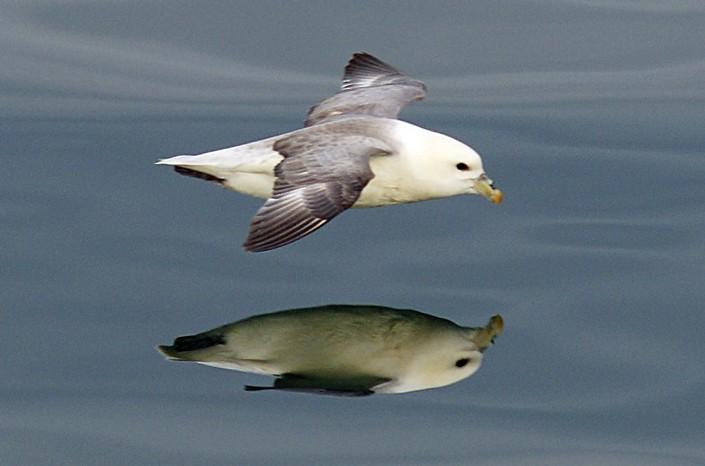 a bird flies over a lake's surface