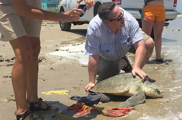 A man handling a large sea turtle on a crowded beach