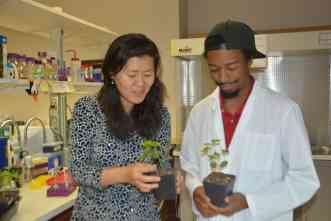 Cotton blight's own 'secret weapon' may provide means to beat disease