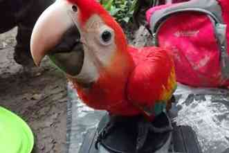 Tambopata Macaw Project collects years of data in Peruvian rainforest