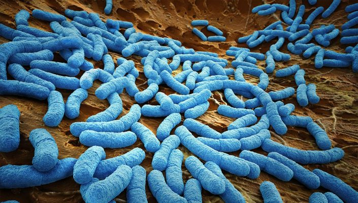 image of microbes