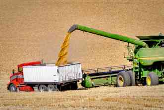 USDA-funded project will encourage production of organic wheat and beef