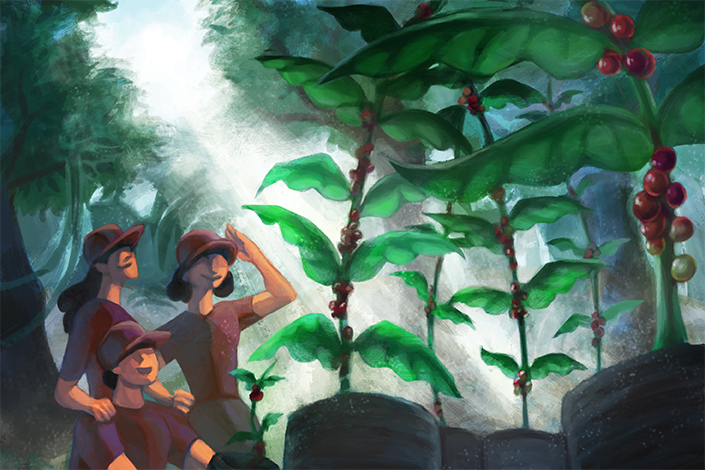 An illustration of three explorers finding coffee plants