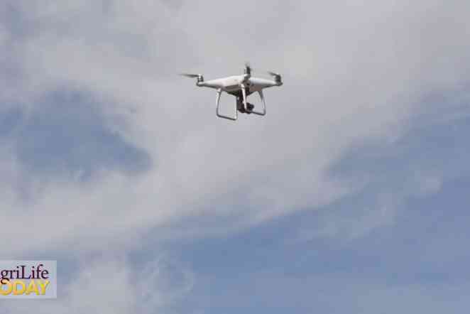 Drones allow researchers to monitor wheat crops faster, more frequently
