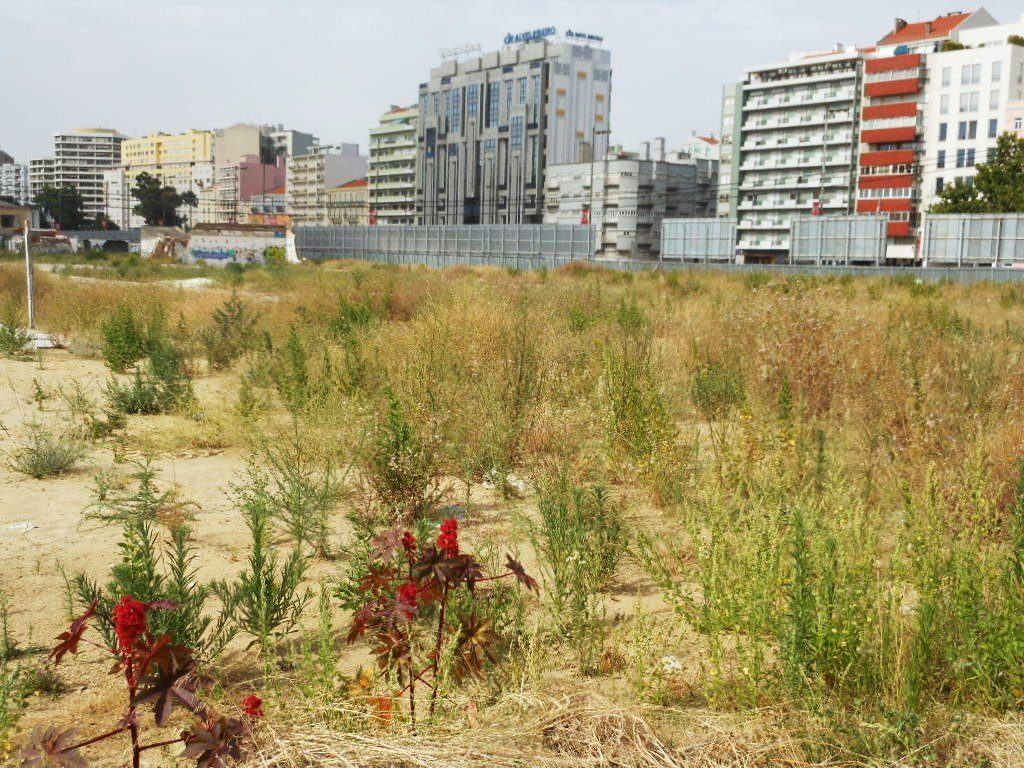 weeds growing in a vacant lot near urban area
