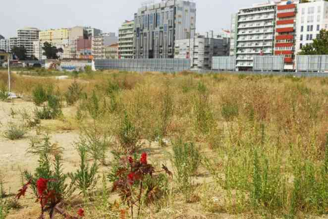 Study of vacant urban land inspires innovative distribution concept