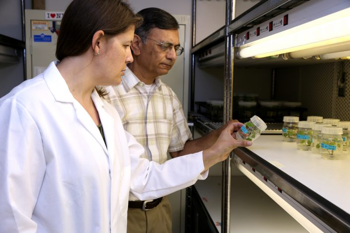 Lab scientists examine a plant tissue culture