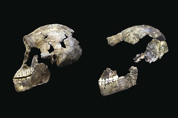 "Neo"" skull from Lesedi Chamber (left) with DH1 Homo naledi skull from Dinaledi Chamber"