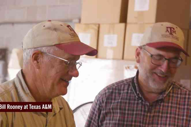 Co-champions of academic research: Bill Rooney and Steve Kresovich