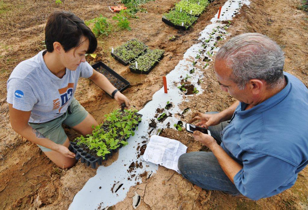 researchers work in field with Asian vegetable plants