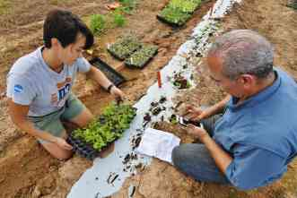 Can Texas farmers produce and market Asian vegetables at a profit?
