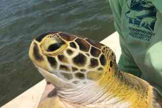 New research center at Galveston will study turtles in Gulf of Mexico