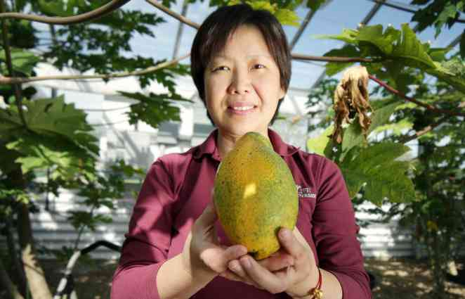 Sex-determining gene in papayas could lead to improved production